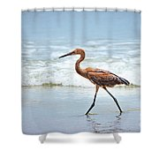 Strolling Shower Curtain by Todd Blanchard