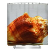 Strombus Alatus Shower Curtain