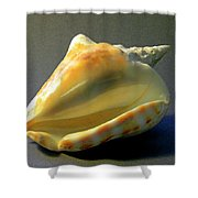 Strombus Inermis Seashell Shower Curtain