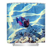 Strong Teeth. Very Tasty Corals. Hollywood Smile. Shower Curtain