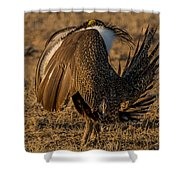 Strutting And Puffing Shower Curtain