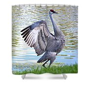 Strutting Sandhill Crane Shower Curtain