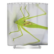 Stuck On Metallic Shower Curtain