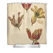Studies Of Four Tulips, Elias Van Nijmegen, C. 1700 - C. 1725 Shower Curtain