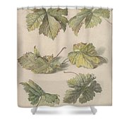 Studies Of Vine Leaves, Willem Van Leen, 1796 Shower Curtain