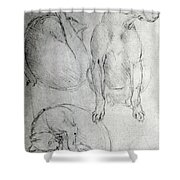 Study Of A Dog And A Cat Shower Curtain