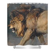 Study Of A Lion Shower Curtain
