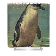 Study Of A Penguin Shower Curtain