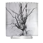 Study Of A Tree Shower Curtain