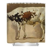 Study Of A Young Bull Shower Curtain