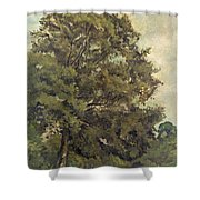 Study Of An Ash Tree Shower Curtain