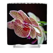 Study Of An Orchid 3 Shower Curtain