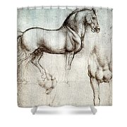Study Of Horses 1490 Shower Curtain