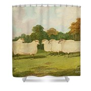 Study Of Sheep In A Landscape   Shower Curtain by Richard Whitford