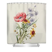 Study Of Wild Flowers Shower Curtain by English School