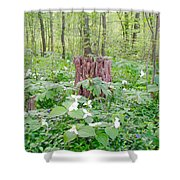 Stump By The Trilliums Shower Curtain