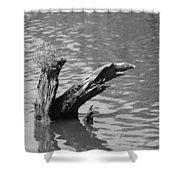 Stump In Lake Shower Curtain