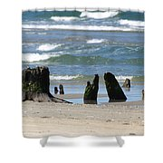 Stumpy Beach Shower Curtain