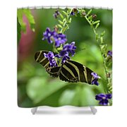 Stunning Black And White Zebra Butterfly In The Spring Shower Curtain