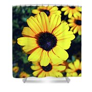 Stunning Black Eyed Susan  Shower Curtain
