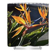 Stunning Bunch Of Flowers With Bright Orange Petals  Shower Curtain