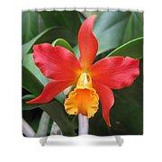 Stunning Cattleya Shower Curtain