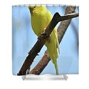 Stunning Little Yellow Budgie Parakeet In Nature Shower Curtain