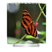 Stunning Oak Tiger Butterfly Resting On Flowers Shower Curtain