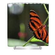 Stunning Orange And Black Oak Tiger Butterfly In Nature Shower Curtain