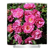 Stunning Pink Roses Shower Curtain
