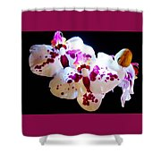Stunning Twin Orchids Shower Curtain