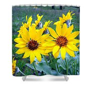 Stunning Wild Sunflowers Shower Curtain