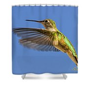 Stylized Hummingbird In Hover Shower Curtain