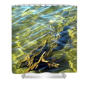 Submerged Tree Abstract Shower Curtain