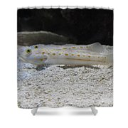 Substrate-sifting Diamond Watchman Goby Pair Shower Curtain