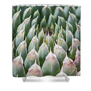 Succulant Spikes Shower Curtain