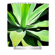 Succulent Agave Art By Sharon Cummings Shower Curtain
