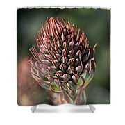 Succulent Bud Shower Curtain