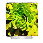 Succulent Close Up Shower Curtain