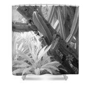 Succulent Delight Shower Curtain