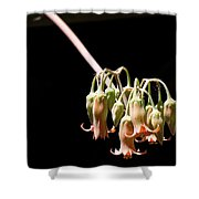 Succulent Flower Shower Curtain