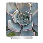Succulent In Pastels Shower Curtain