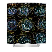 Succulent Shower Curtain by Rod Sterling