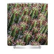 Succulent Series Vi Shower Curtain