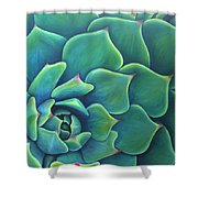 Succulent Study 2 Shower Curtain