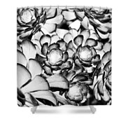 Succulents Monochrome Shower Curtain