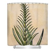 Sugar Cane, 1597 Shower Curtain