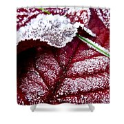 Sugar Coated Morning Shower Curtain