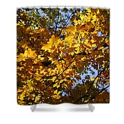 Sugar Maple Shower Curtain