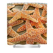 Sugar Starfish Shower Curtain